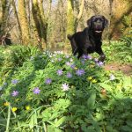 Black Labrador With Flowers