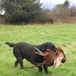 Ottie: A great retrieve